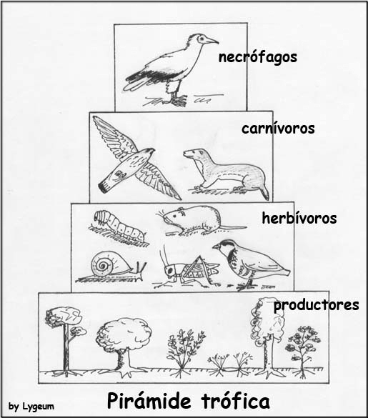 pirámide ecológica